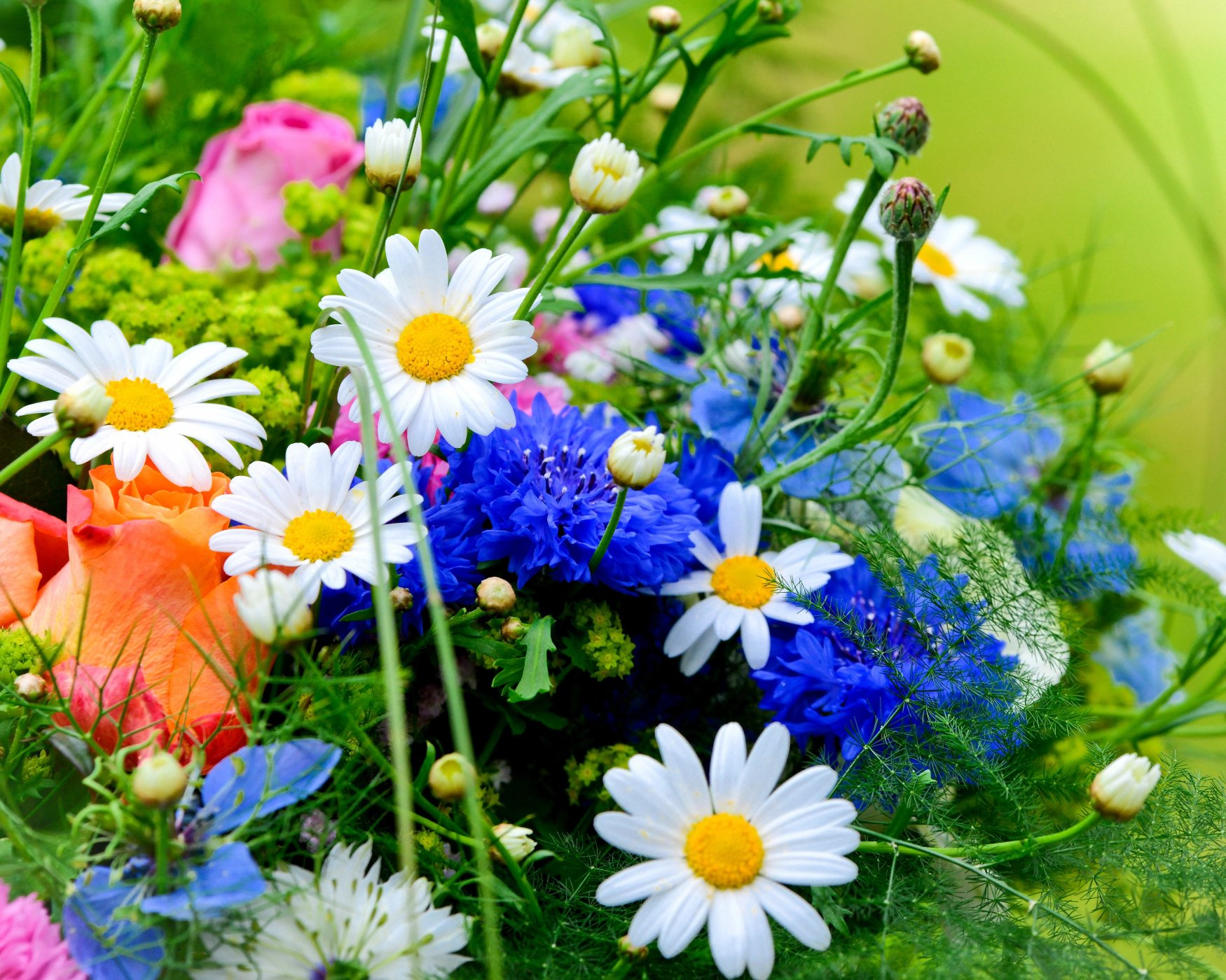 Летние цветы 1750 x 1400