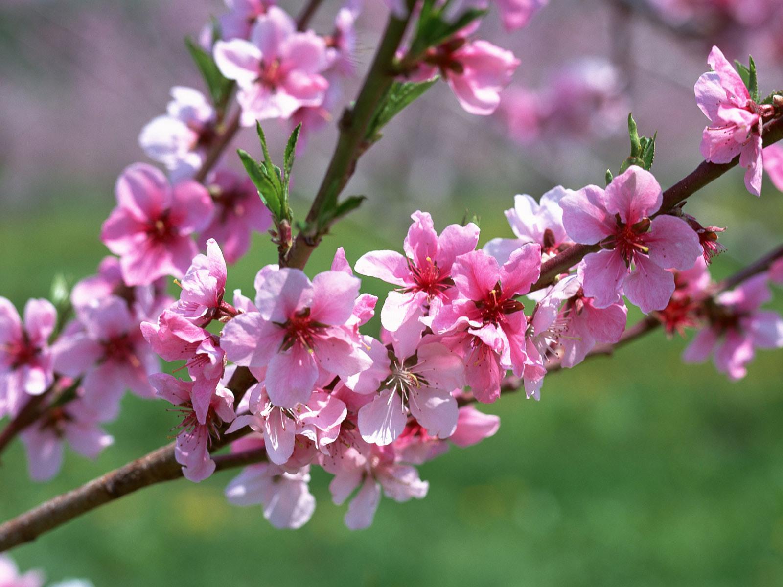 Весна пришла 1600 x 1200