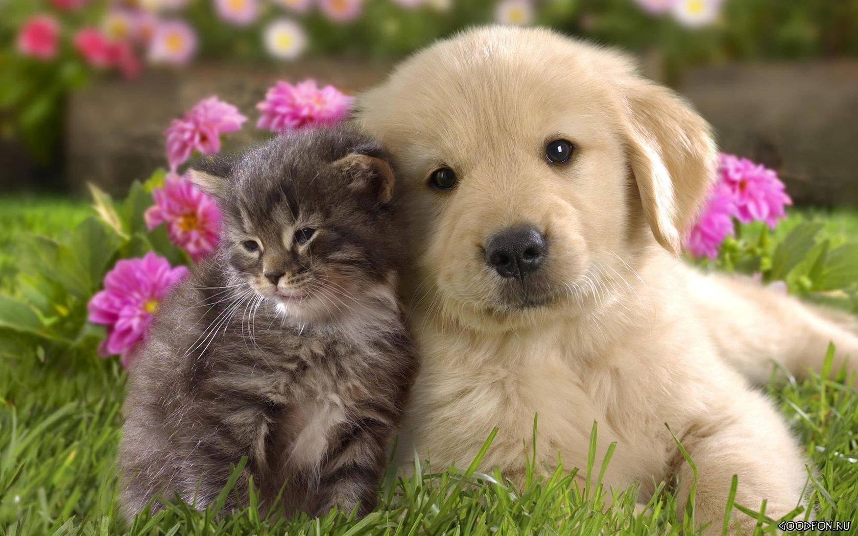 Собака и кот 1680 x 1050