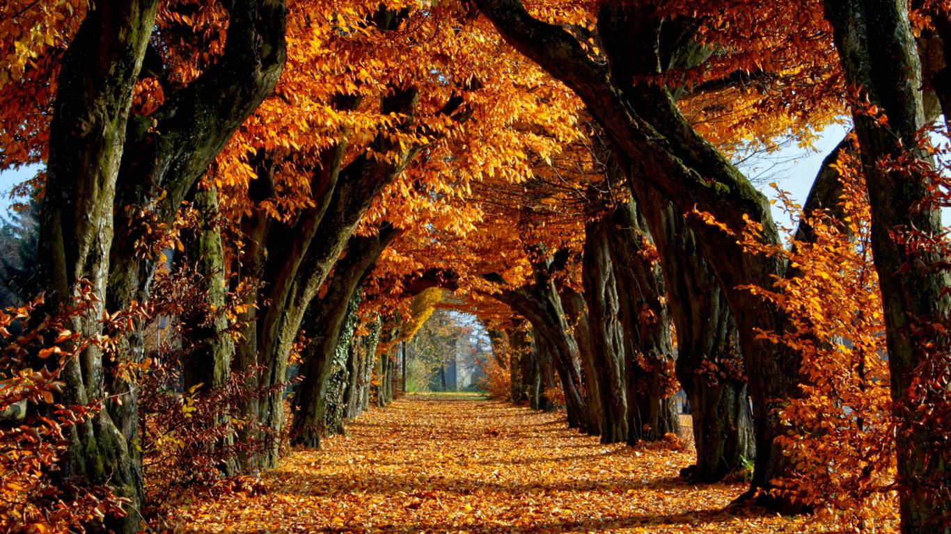 Золотая осень 1366 x 768