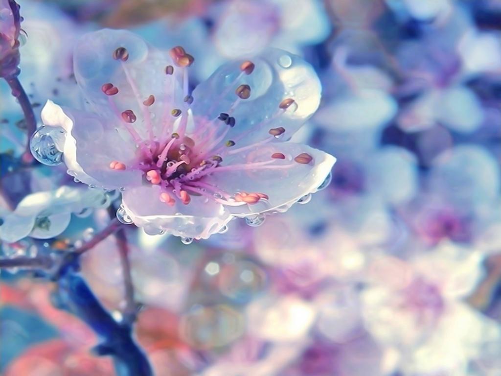 Весна 1024 x 768