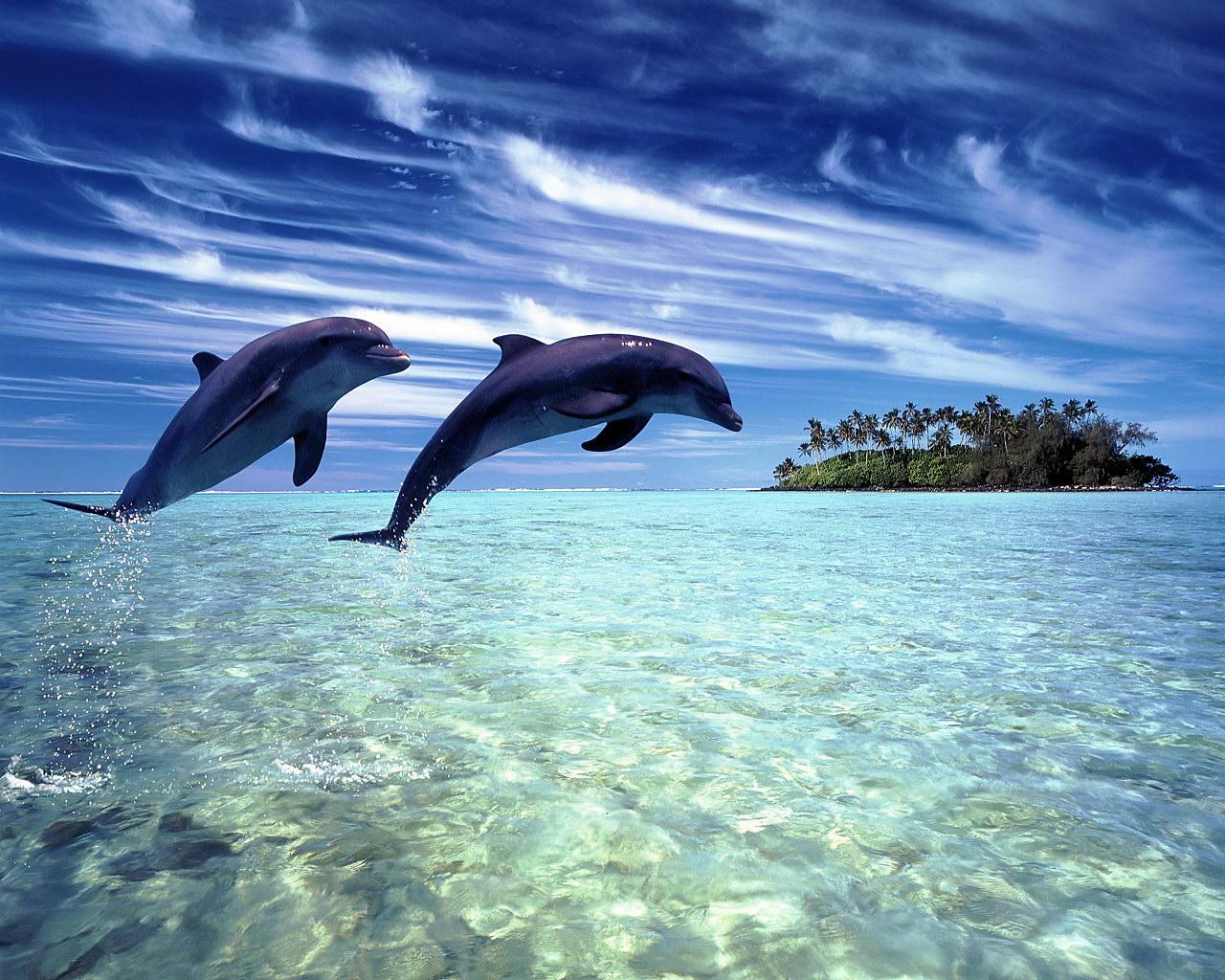 Дельфины 1280 x 1024