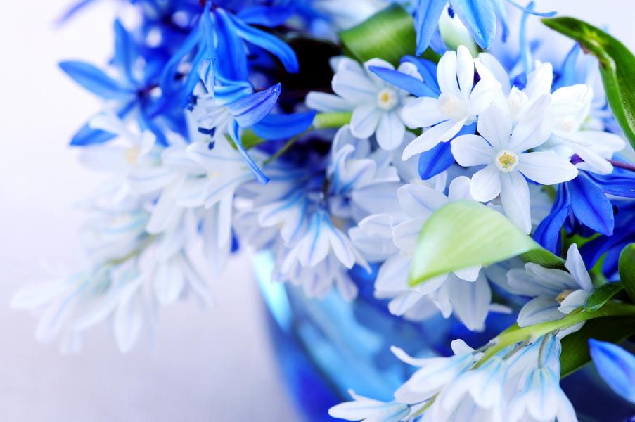 Цветы 903 x 600