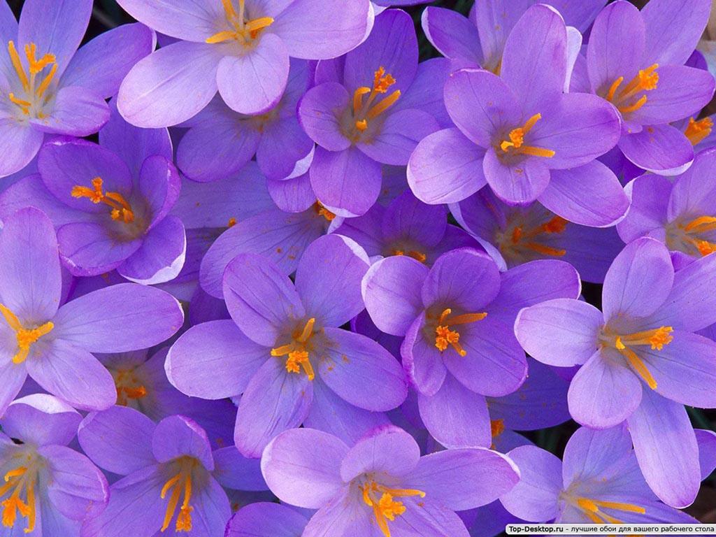 Картинки цветы красивые 5