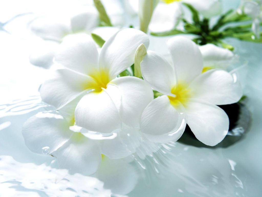 Белые цветы 1024 x 768