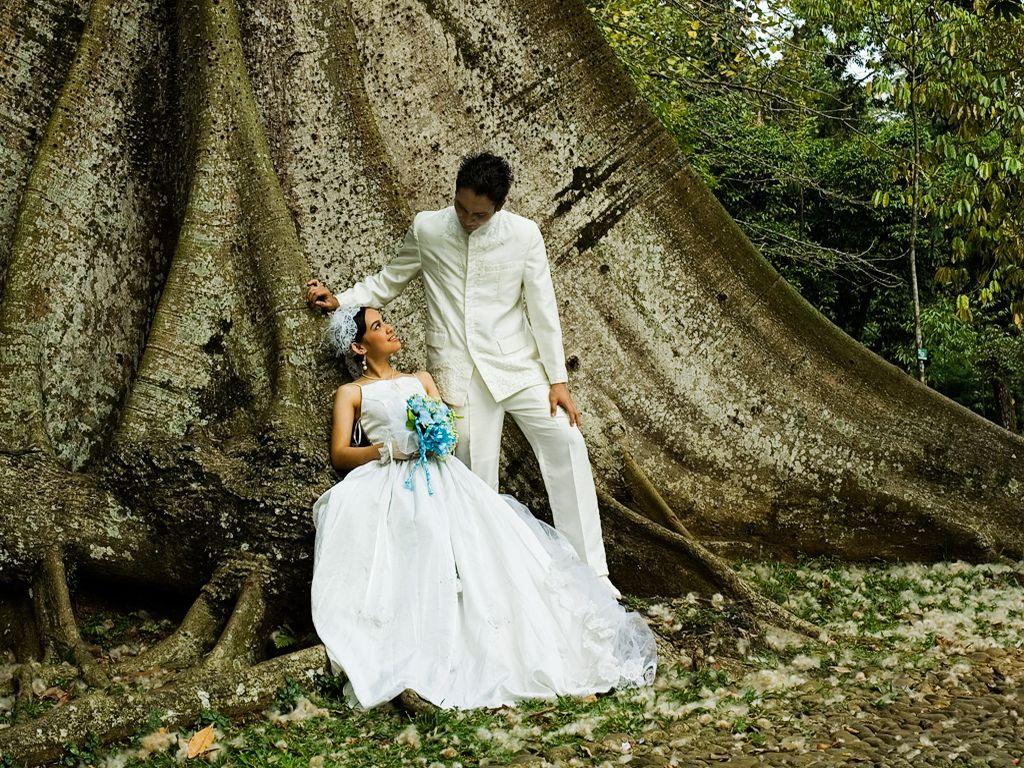 Свадьба 1024 x 768