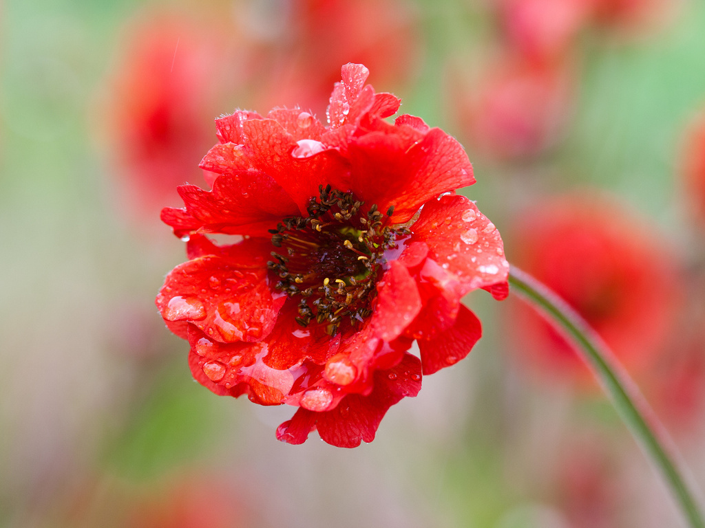 Классные цветы картинки 1