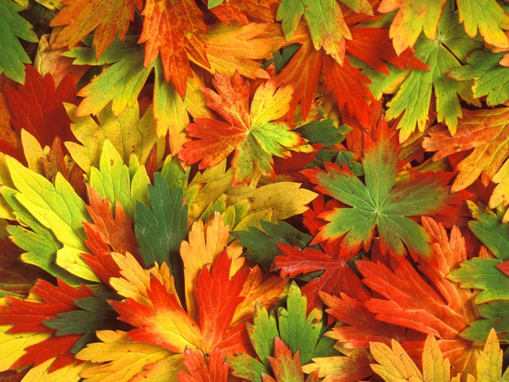 Осенние листья картинки цветные шаблоны для вырезания - 735c4
