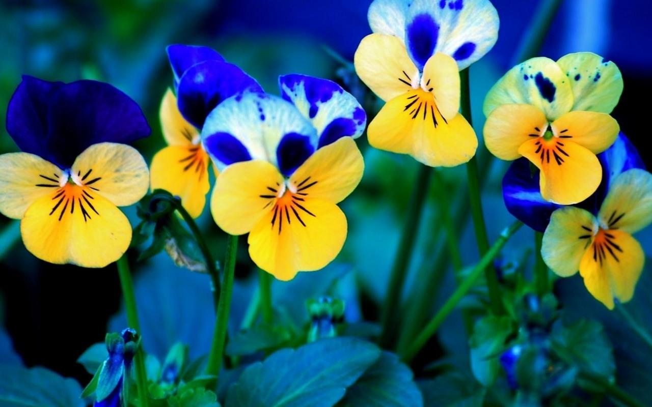 обои в цветок: