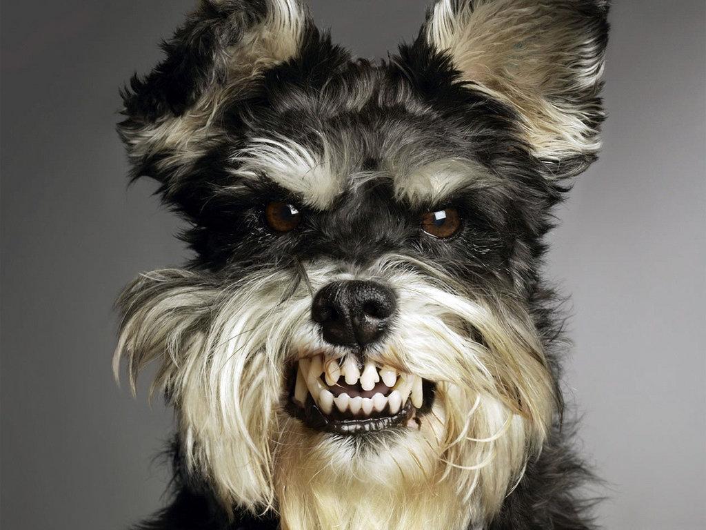 Злая собака 1024 x 768