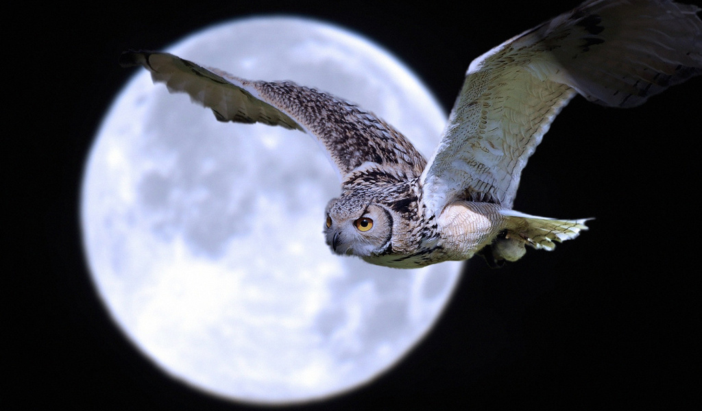 Летящая сова появляется - 5e