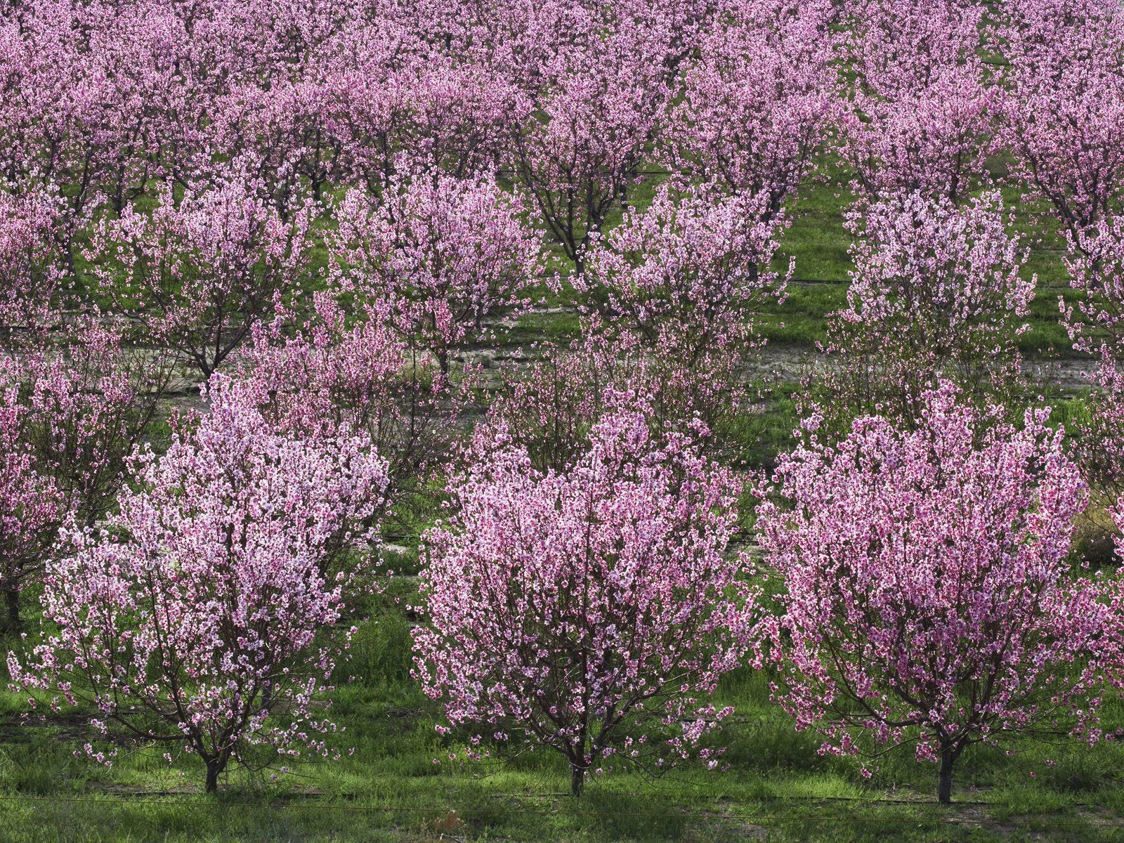 Весна 1600 x 1200