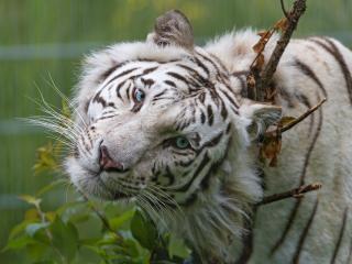 белый ягуар mp3: