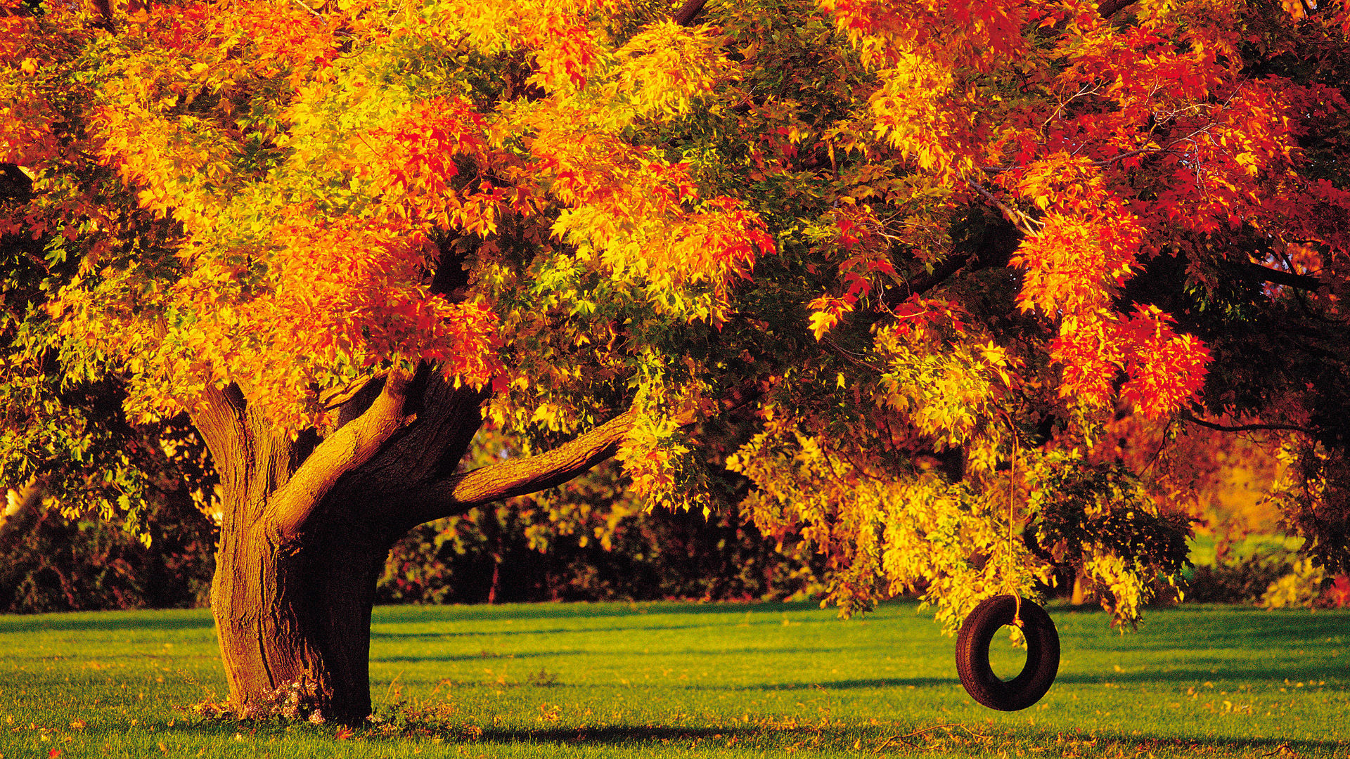 Золотая осень 1920 x 1080