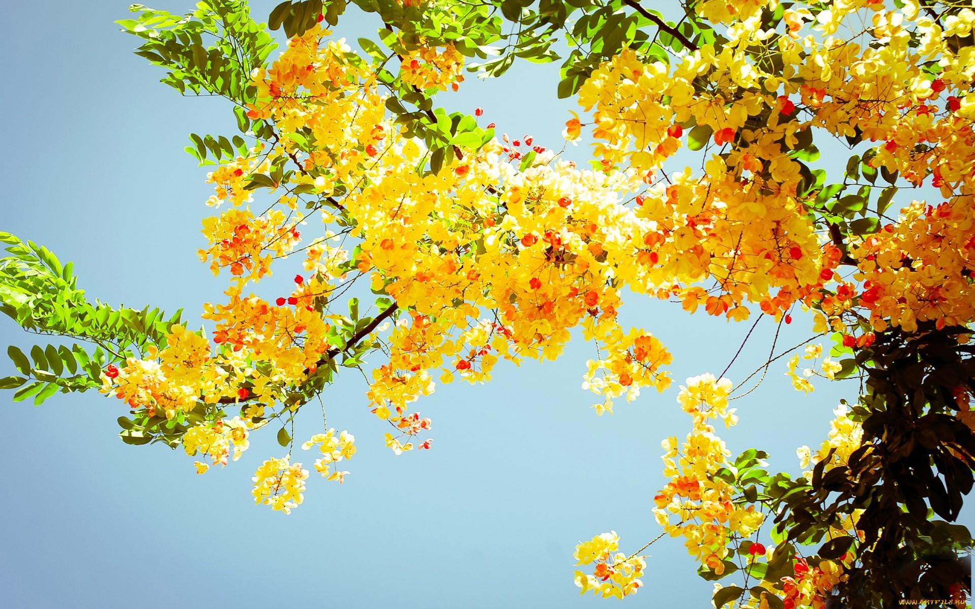 Цветущие деревья 1920 x 1200