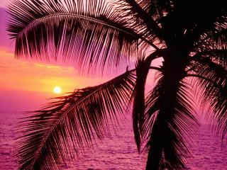 пальмы солнце море пляж картинки