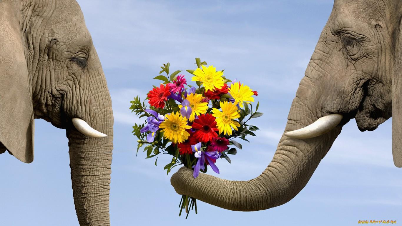 Красивые картинки животных и цветов 8
