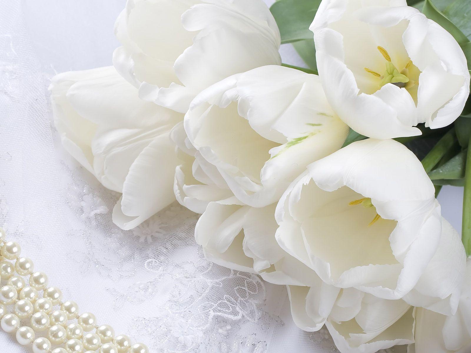 обои для стола тюльпаны: