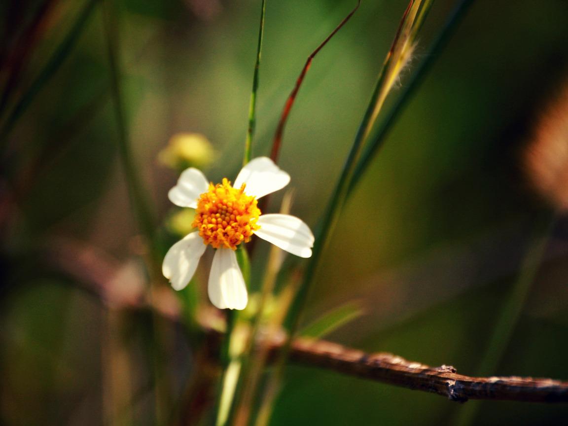 Красивые картинки для форума цветы 3