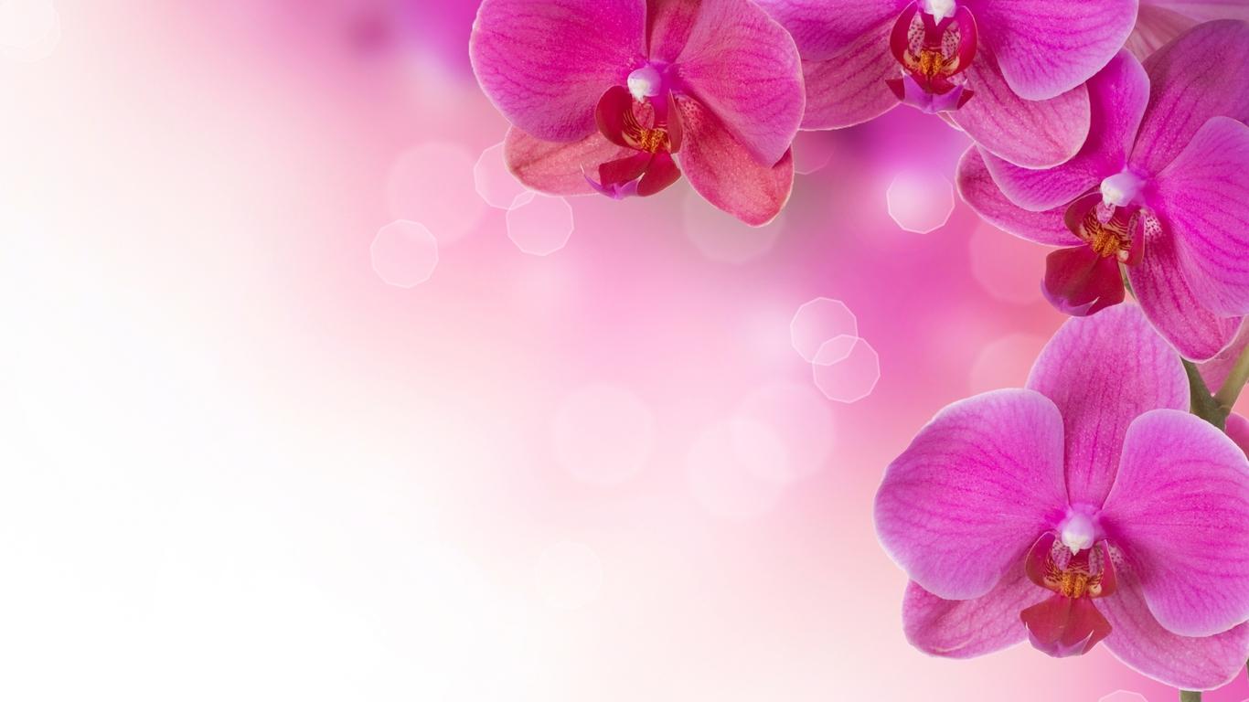 Картинки в розовом цвете фото 4