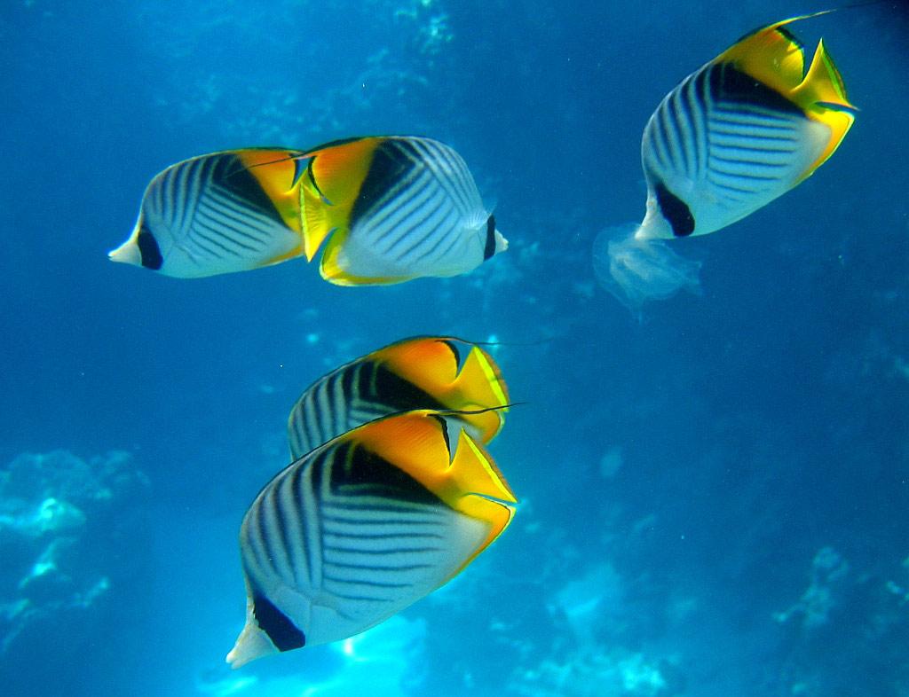 Обои рыбки