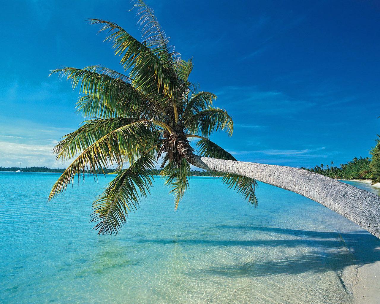 Море пальмы пляж 1280 x 1024